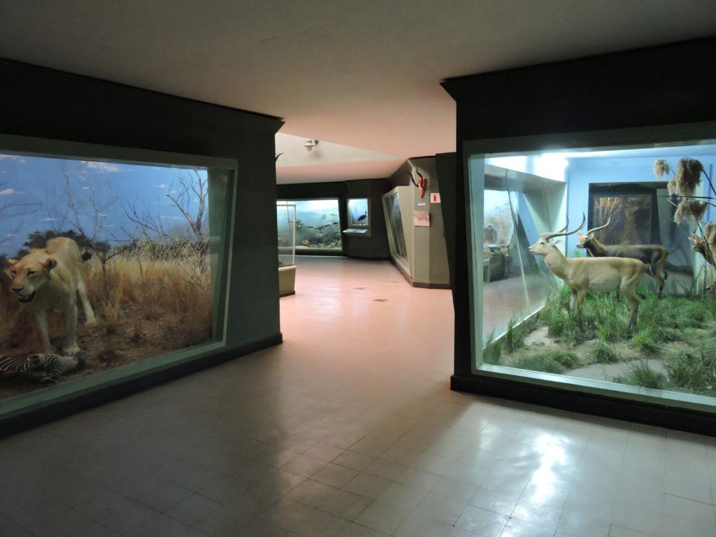 موزه لیوینگستون