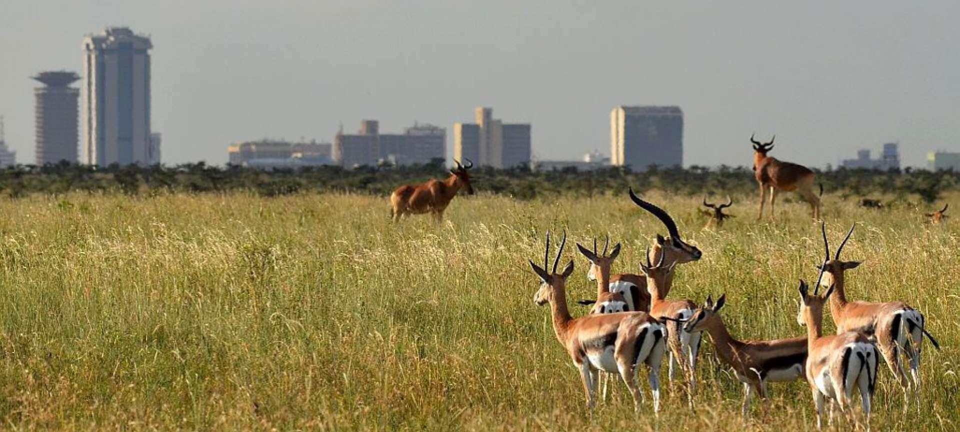 پارک ملی نایروبی