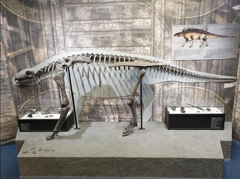 موزه دریای پانونی میسکلک