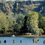 سافاری پارک ملی رانتامبور هند
