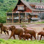 پارک ملی ابردار در کنیا