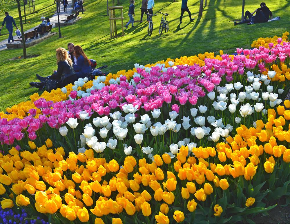 گل های لاله استانبول