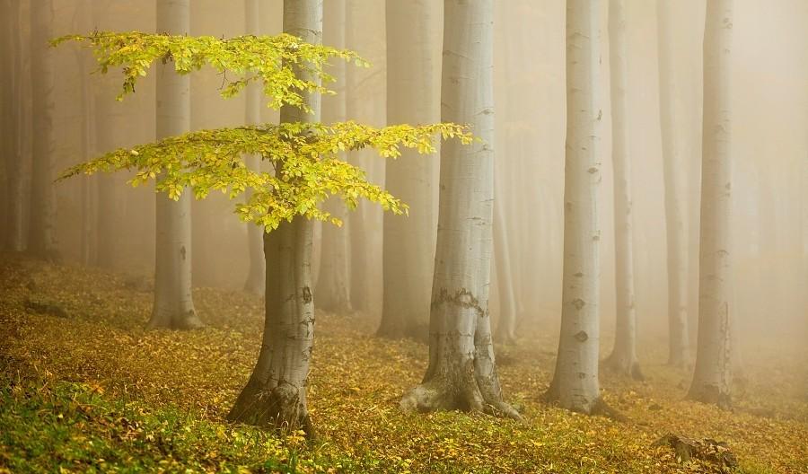 طبیعت بسیار زیبا در جنگل راش سواد کوه