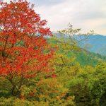 کوهستان تاکائو ژاپن