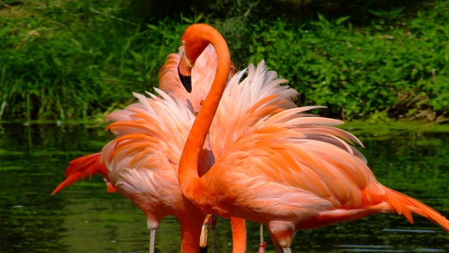 باغ وحش اوستراوا