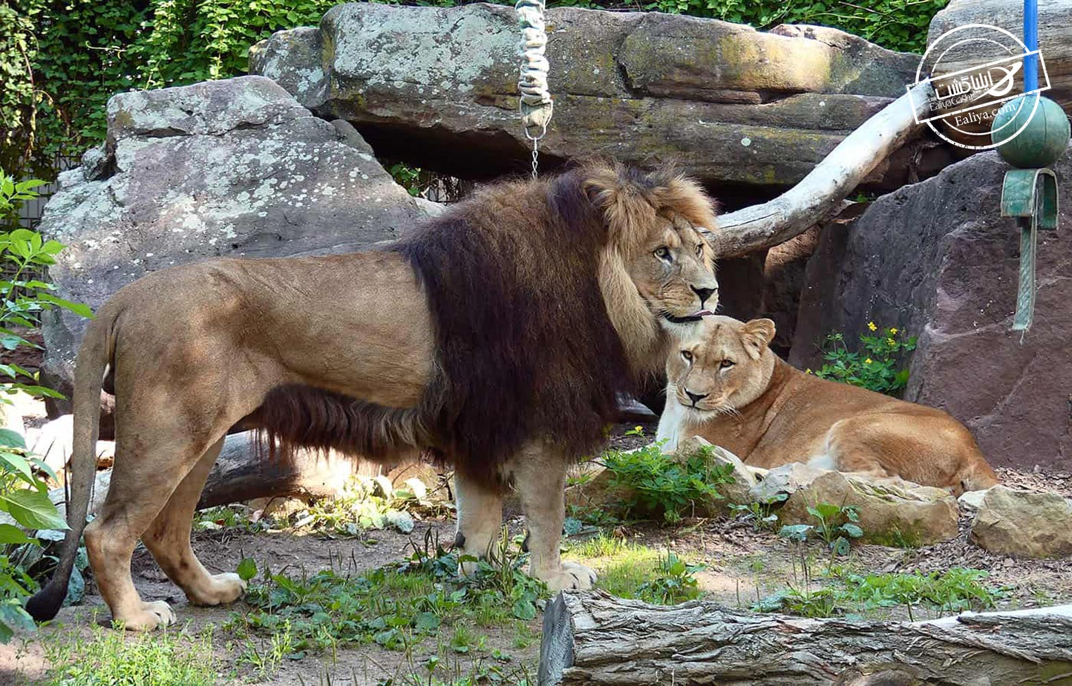 باغ وحش هایدلبرگ