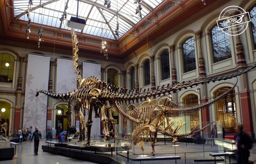موزه تاریخ طبیعی آلمان