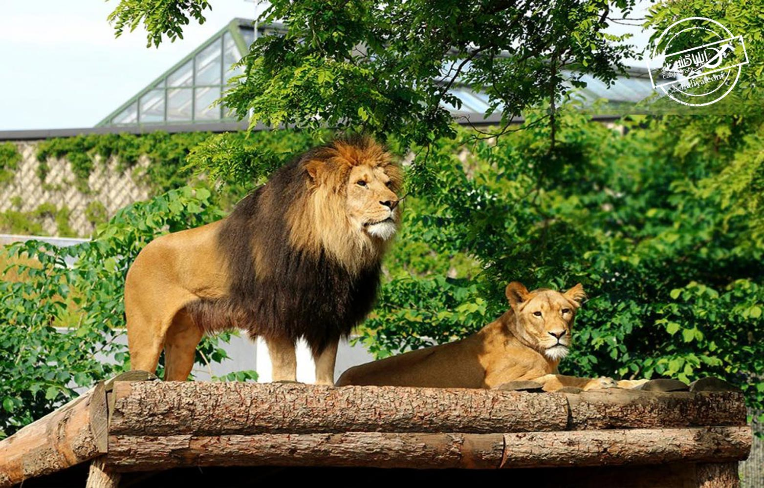 ساخت باغ وحش