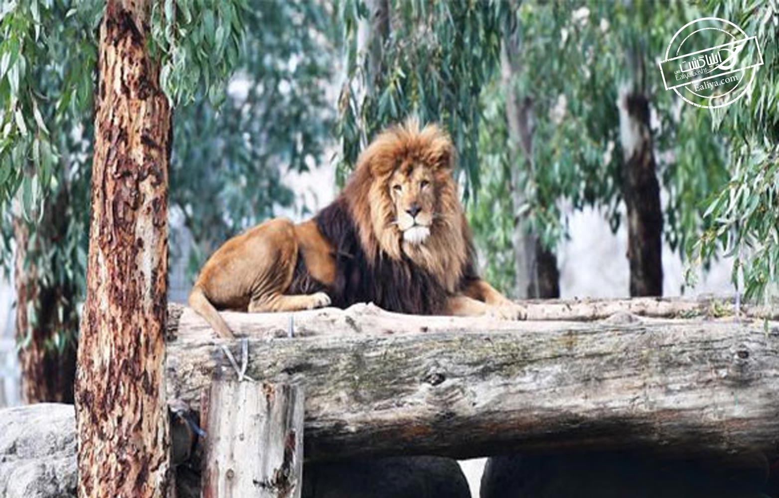 پارک ملی باغ وحش ازمیر
